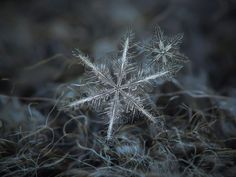 Alexey Kljatov takes marvelous closeup snowflake pictures. Real snow crystals are amazing objects for macro photography, thanks to their beauty, uniqueness and unlimited diversity. Snowflake Photography, Macro Photography, Photography Ideas, Winter Photography, Creative Photography, Snowflake Wallpaper, Snowflake Pictures, Fotografia Macro, Grain Of Sand