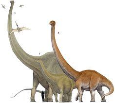 "Prehistoric taxonomie   1.Amphicoelias altus (""biconcave"")..."