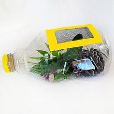Juice Bottle Bug Catcher for outdoor fun . Fun way to catch and then observe bugs for the kids. Nature Activities, Craft Activities For Kids, Science Activities, Science Projects, Summer Activities, Projects For Kids, Crafts For Kids, Recycling Projects, Science Art