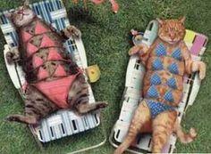 Well, it IS close to sun bathing season :-P