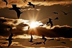 Credit: David Billinge/Corbis Gulls gather above the promenade at Morecambe, Lancashire Morecambe, Our World, Nature Photos, Autumn Leaves, Wildlife, Environment, Around The Worlds, Gulls, Earth