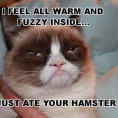 What-Makes-Grumpy-Cat-Warm-Inside