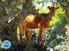 Voorjaarsvakantie naar Griekenland Nars, Animals, Crete Holiday, Snorkeling, Animales, Animaux, Animal, Animais