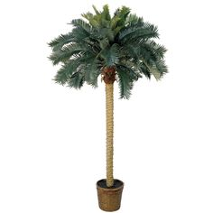 6' Sago Palm Silk Tree *** Visit the image link more details.