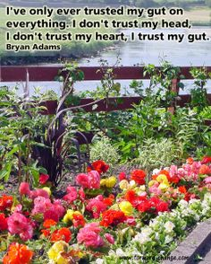 Your #gut always tells the truth. #intuition