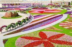 Dubai jardins, flores