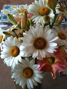 Daisies and Day Lilies