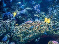 Home - Aquarium Fish Home Aquarium Fish, Underwater Fish, Beautiful Fish, Life