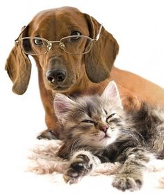 cute cat and dog picture