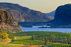 Scenic Iconic Okanagan Blue Mountain Vineyard, Canada