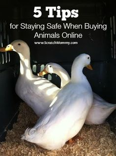 5 Tips For Staying Safe When Buying Animals Online