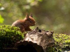 Baby Eekhoorn