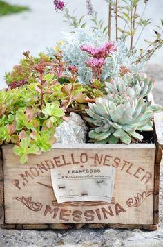 succulent wine box