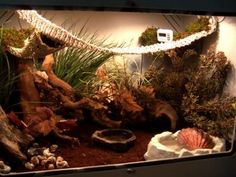 How to Set up a Hermit Crab Habitat: