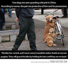 nos encargaron cuidar la bicicleta