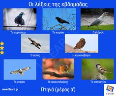 Learn Greek, Vocabulary, Learning, Words, Studying, Teaching, Vocabulary Words, Horse, Onderwijs