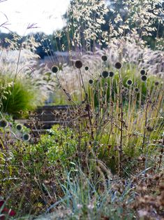 Grasses act as a fantastic foil for perennials and create texture, movement, drama, and amazing silhouettes—from the billowy haze of Deschampsia or the rich colors of Panicums to the light, feathery inflorescence of Pennisetums.