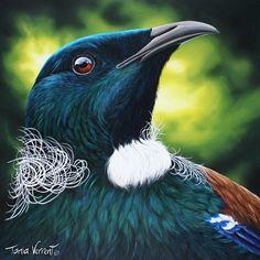 "Watching You"" by Tania Verrent Tui Bird, Maori Designs, New Zealand Art, Maori Art, Kiwiana, Bird Illustration, Arm Band Tattoo, Beautiful Birds, Art Forms"