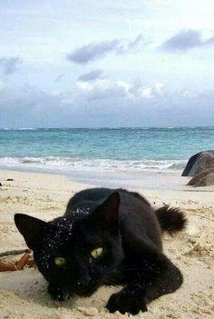 ̄(=∵=) ̄ beach cat