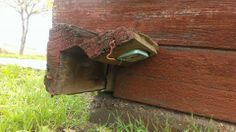 Neat concealed #geocache