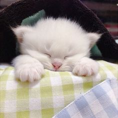 """A kitten provides a child with a sleepover friend for life."" --Jo Kittinger"