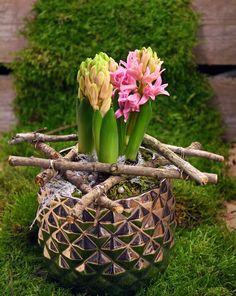 holmsunds blommor  Hyacinter, julblommor