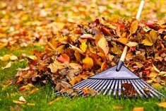 Bob's Tip of the Day: Don't rake anything you can mow—leaves that fall on your lawn can be removed easily as long as you're still cutting the grass. When the grass stops growing and you need to start raking, be sure to wear gloves to save your hands from blisters. Don't rake long distances—bring your leaf bag to the leaves, not the other way around. If you have a lot of leaves, try raking them onto a tarp and then pulling the tarp along with you as you work. Fall Lawn Care, Lawn Care Tips, Garden Club, Lawn And Garden, Garden Rake, Garden Seeds, Garden Tools, Fall Clean Up, Gardening
