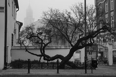https://flic.kr/p/P4ViHt | Lublin Fog | A foggy day in Lublin. Bernardynska Str. In-camera JPEG
