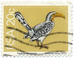 1973 South Africa Stamp - Hornbill Union Of South Africa, Wild Creatures, African Animals, African History, Stamp Collecting, Pears, Beautiful Birds, Postage Stamps, Paper Art