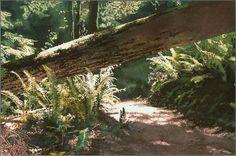 "James Koll   ""Forest Shade  Near  Campbell River""  Watercolour, 11""x17""  (Sold)  www.jameskoll.com"