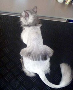 50 cats with lion haircuts haircut styles lions and cat the most ridiculous cat haircuts youll ever see page 5 winobraniefo
