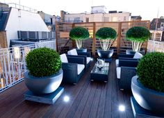 Box (Buxus sempervirens) planters on roof terrace by Philip Nixon. Love the planters