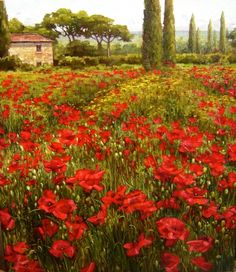 poppy fields in tuscany | Commission a an original Caroline Zimmermann Painting