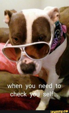 #dog #pitbull #pitbulls #dogs #pittys #puppy #funny #animals #pets http://www.buzzblend.com