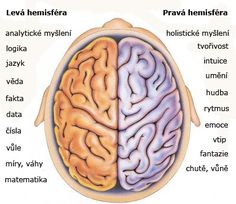Používáte více pravou či levou mozkovou hemisféru? Udělejte si jednoduchý test...