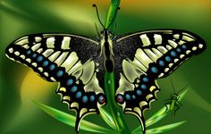pics of butterflies | Flower Illustration - Created the illustration completly using Adobe ...