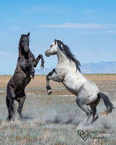More Wild Horse Photos #wildhorses #horses