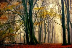 In Love with Fall by larsvandegoor. Please Like http://fb.me/go4photos and Follow @go4fotos Thank You. :-)
