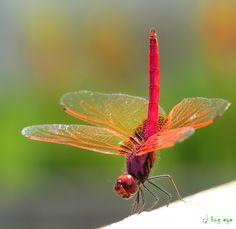 ~ gymnastics ~ by bug eye :)