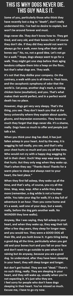 Your pets never die. (I know it says dogs. But I think this could be rather applicable to a cat as well) --- excuse me, I have to go cry now. All Dogs, I Love Dogs, Puppy Love, Best Dogs, Dogs And Puppies, Doggies, Corgi Puppies, Mini Pinscher, Animals And Pets