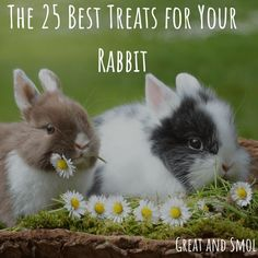 The 25 Best Treats for your Rabbit Everyone wants to spoil their pet with special treats. Find out the best rabbit treats to give for health and happiness. Rabbit Treats, Rabbit Toys, Pet Rabbit, House Rabbit, Dog Treats, Lionhead Rabbit, Mini Lop, Rabbit Behavior, Rabbits