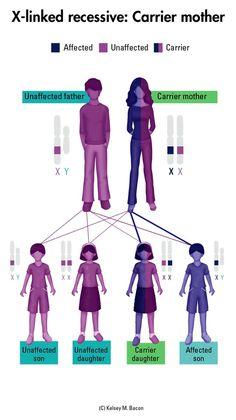 Hemophilia and Von Willebrand disease: Important information for understanding the inheritance of bleeding disorders. #hemophilia #von_willebrand