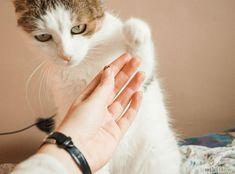 Lifehacks-für-Katzen