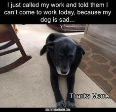 Funny Animal Pictures Of The Day - 24 images #funnydogquotes