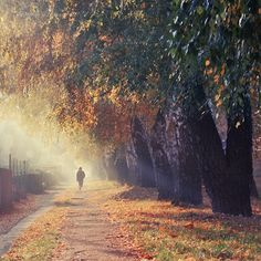 Path of Gold by Tanjica Perovic on 500px