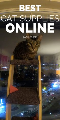 Looking for cat furniture and supplies on Amazon? Check out this guide! I've worked with over 400 cats and have tested every cat product online. These are actually worth your money! Shop cat trees, furniture, litter supplies, healthy cat food, travel and emergency supplies, and fun cat toys. I recommend these cat supplies to my friends and family, and I have many of them as well! These are the best you'll find on Amazon that your cat will love more than the box. Get enrichment ideas #affiliate Best Cat Litter, Litter Box, Cool Cat Toys, Cool Cats, Healthy Cat Food, Money Shop, Cat Hacks, Cat Sitter, Cat Trees