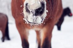 snowy nose