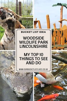 Woodside wildlife park near Lincoln in Lincolnshire. My top 10 things to see and do. Family day out in the UK. #familyfriendly #family #familytravel #travel #dayout #lincolnshire #mytraveldilemma