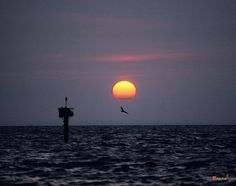 1986 Photograph, Sunset with an Osprey on the wing beneath the setting sun, Tilghman Island, Maryland. © 2002.  The bird's nest is on the channel marker to the left.