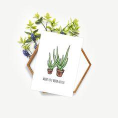Aloe / aloes